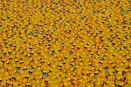 Where's Quackers?