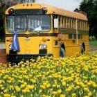 chicago-bus