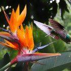 hummingbird-exotic