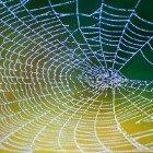 web-watery