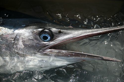 sustainablefishing