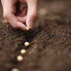 Monsanto-seeds