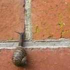snail-up-bricks