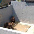 Bears-captivity