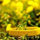 yellow-livestrong