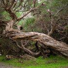 Tree-fell