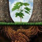 Plants-sharing