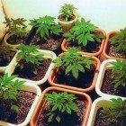 Weed-planting