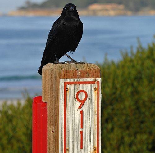 Crow-911