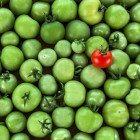 One-red-green-tomatoes