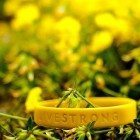 Livestrong-yellow