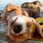 Legal-Beagles