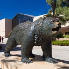 UCLA-Bear