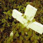 Ivy-Cross