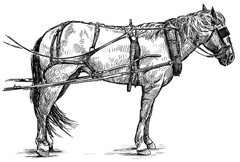 Blinded-horse