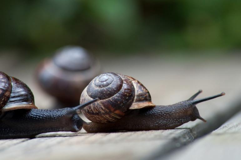 Snail-race