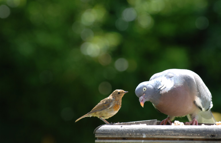 Big and small birds discussing philanthropy