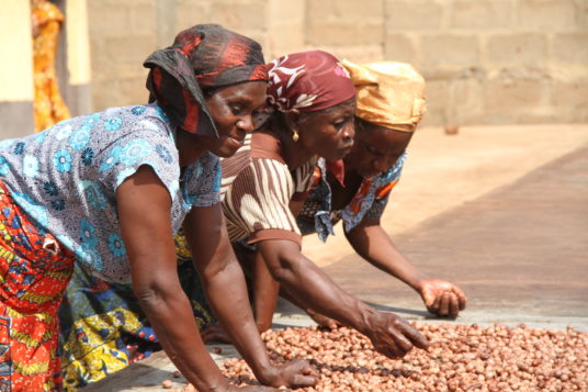 Shea Yeleen employees working with shea seeds in Ghana.