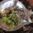 Terrarium-lightbulb