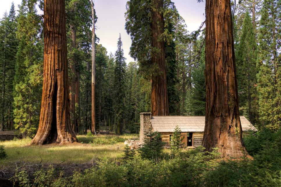 Sequoia National Park (California) Giant-Sequoias