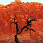 National-park-red-canyon