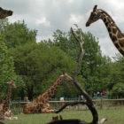Wichita-Zoo