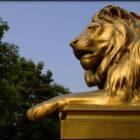 princeton-lion