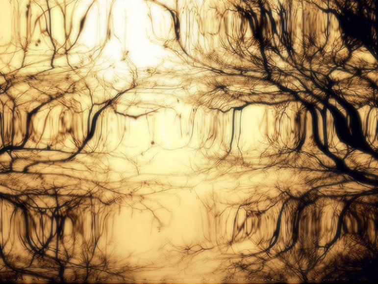 roots-reflection