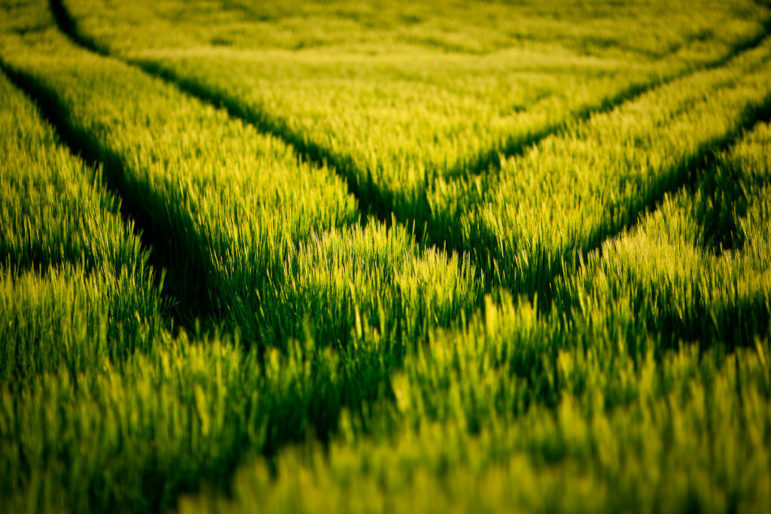 Crossing-tracks-grass