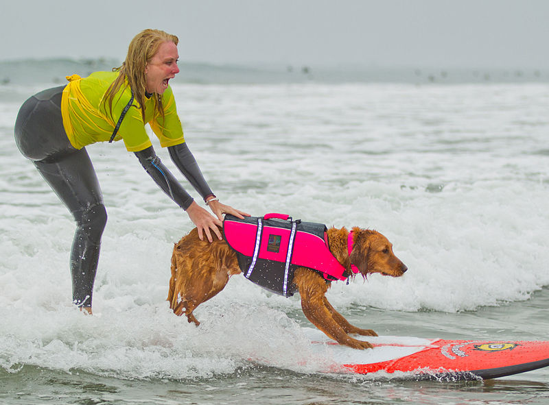Woof Surfing Dog Raises A Cool Half Million In Charitable Funds