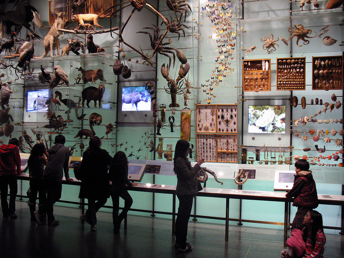 When Does Museum Of Natural History Open