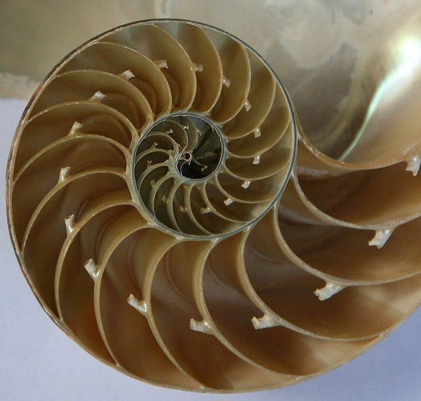 Shell. Image used in the article about the types of nonprofit business models.