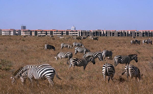 Can Zebras Lead the Way to a More Diverse Tech Sector?